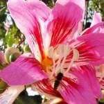 miami-beach-botanical-garden-150x150